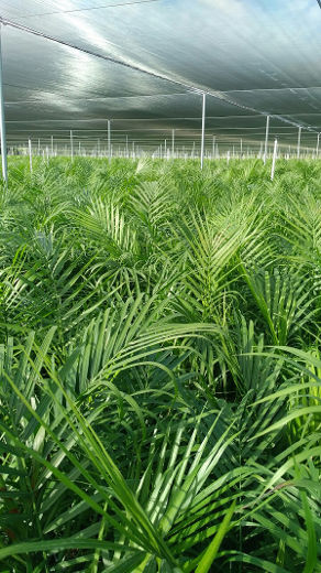 DeGroot: Nurseries in Florida are selling all of the tropical plants they can grow
