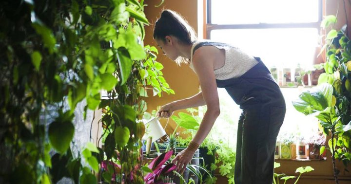 6 Habits Of A Plant-Care Expert