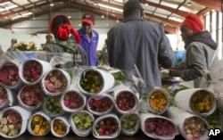 Kenya's Flower Producers Eye US Market