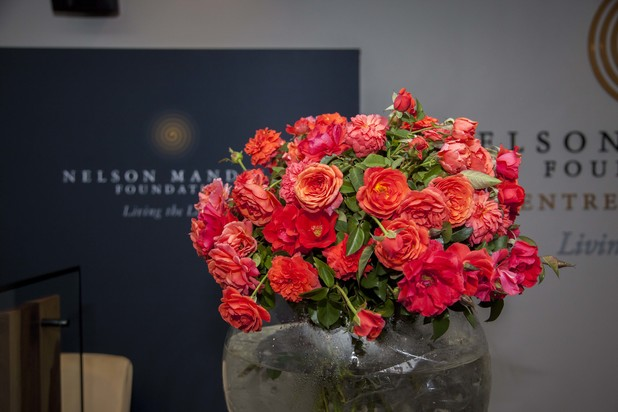 A rose named 'Nelson Mandela' launched ahead of V-Day
