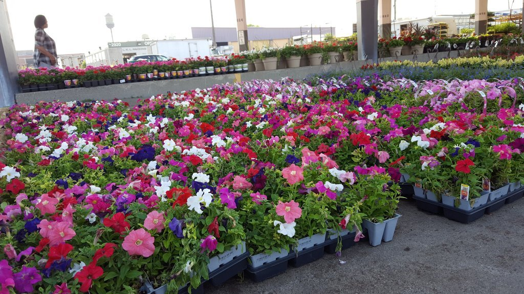 Save The Date: Flower Day At Eastern Market Is May 20