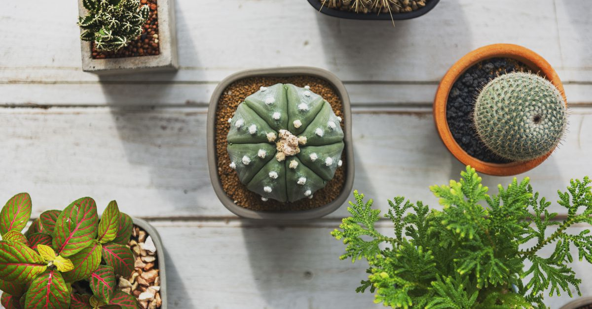 Renton shop will send a little plant to your door every month