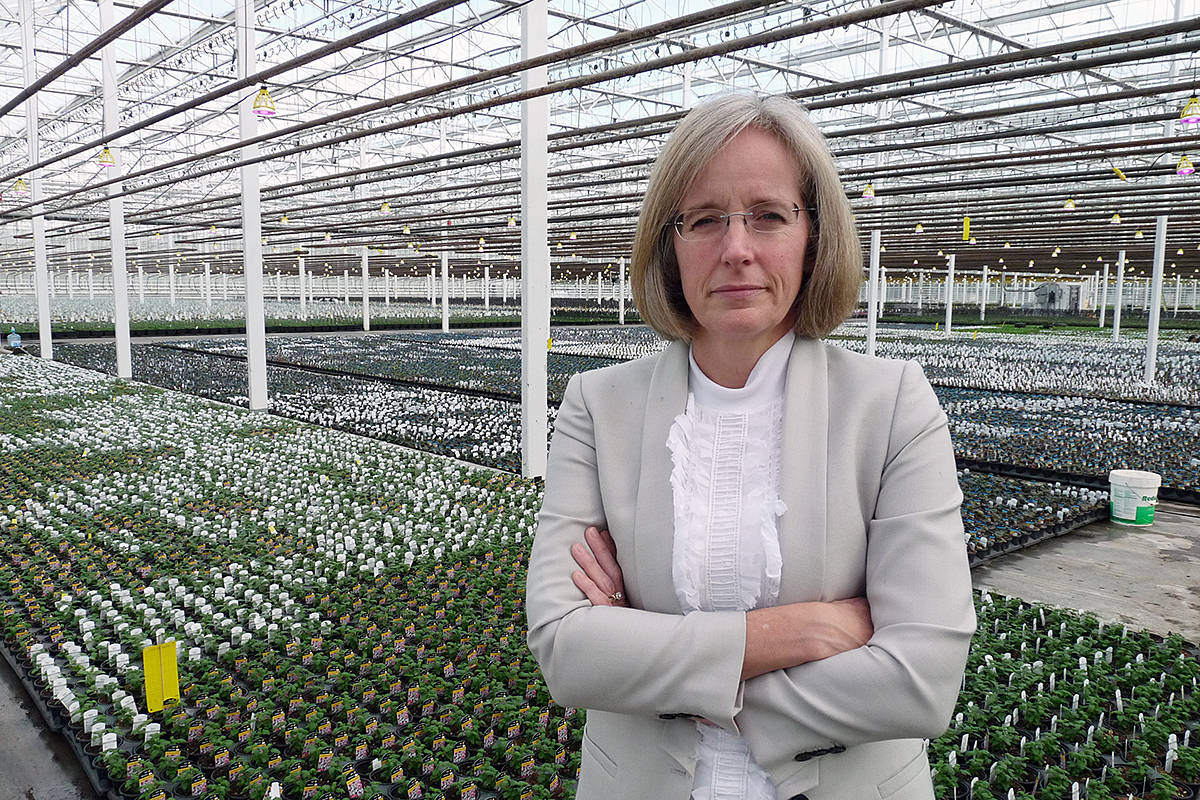 VIDEO: Langley greenhouse faces $100K hit from health tax