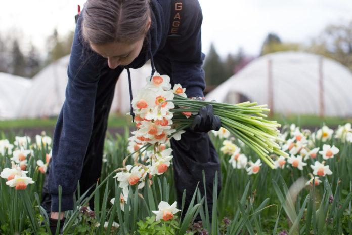 Celebrating Spring in Skagit Valley