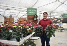 Syngenta Flowers to acquire dahlia assortment from Verwer Dahlia