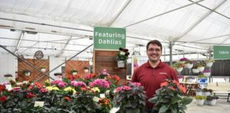 Syngenta Flowers to acquire dahlia assortment from Verwer Dahlia