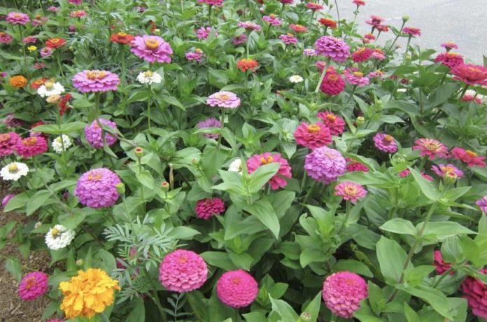 Why you should plant flowers alongside vegetables
