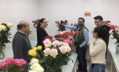 Ecuador: Commercial and future rose varieties on display at Plantec