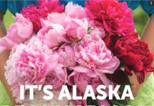 Its Alaska Peony Season