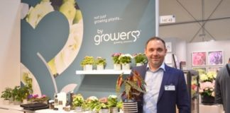 Danish grower produces Begonia Maculata from seed