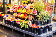 IRI Adds New Floral Data to Store Perimeter Offer
