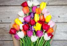 Flower Care Guide: Tulips