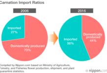 Japan Data: Imported Blooms Fill the Gap as Domestic Cut Flower Shipments Tumble