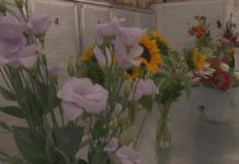 MSU North Farm offers Cut Flower Production short course for current and future farmers
