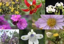 30 Oregon plant species at risk of extinction