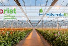 Florist Holland and HilverdaKooij merge