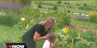 Flower lovers flock to U-pick Springville farm