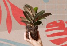 Plant Subscription Boxes You'll Love (Thanks, 2018)