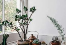 How to Care for Succulents (And Not Kill Them): 9 Plant-Care Tips