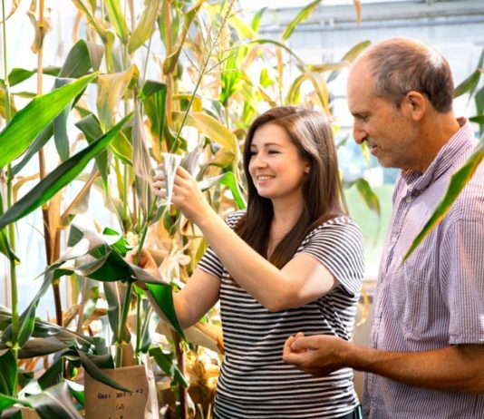 'Turbocharging' photosynthesis increases plant biomass