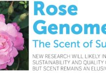 Rose Genome - The Scent of Success