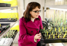 Mexico's new science minister is a plant biologist who opposes transgenic crops