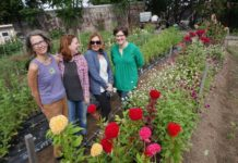 Women in Action: Providence's What Cheer Flower Farm brings beauty to those in need