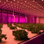The Impact of 'Plant Factories' on the Electric Grid