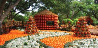 The Fashionable Pumpkin