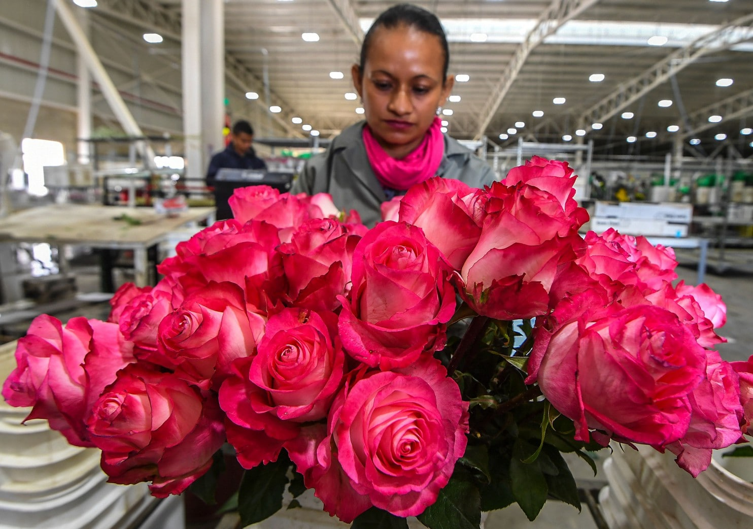 You can give Colombian flowers to your sweetheart guilt-free