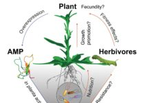 The microbiome of a native plant is much more resilient than expected