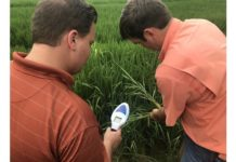 Device Measures Health of Rice Plant, Save Farmers Money