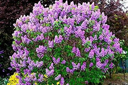 17 Best Landscaping Shrubs Of Spring Super Floral